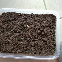 MicroVeggy Blog How to Grow Microgreens 1