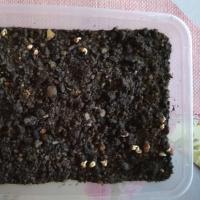 MicroVeggy Blog How to Grow Microgreens 4