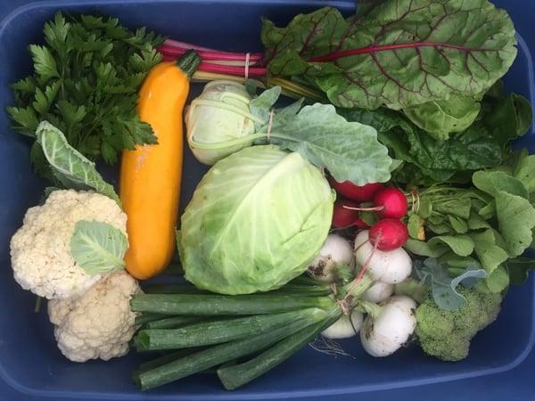 Fiddle Foot Farm vegetable box